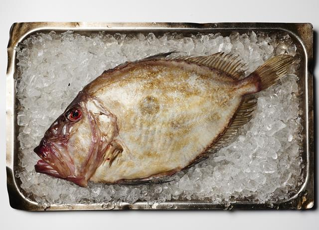 John dory recipes great british chefs for John dory recipe