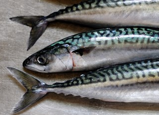 Mackerel Recipe Collection
