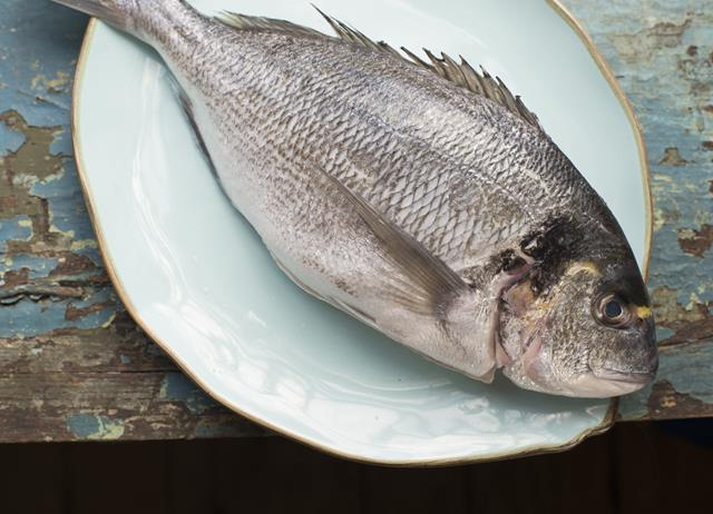 Sea bream