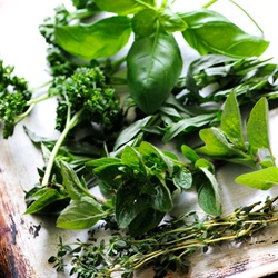 Fresh herb recipes