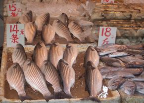 Fish at Hong Kong market