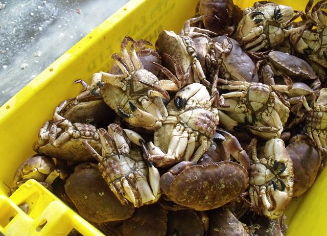 A day at Whitby Crab Company