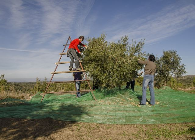 Lleida: Catalonia's olive oil country